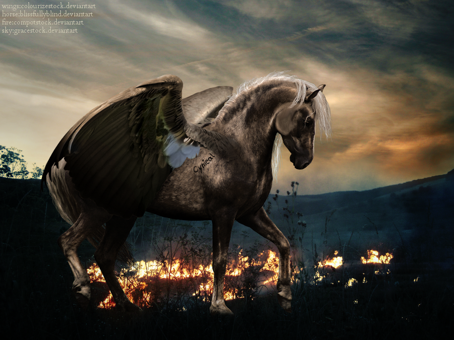 My horses that need another player! Winged_Horse_by_CynicalExpressions