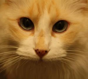 Aqullius's Profile Picture