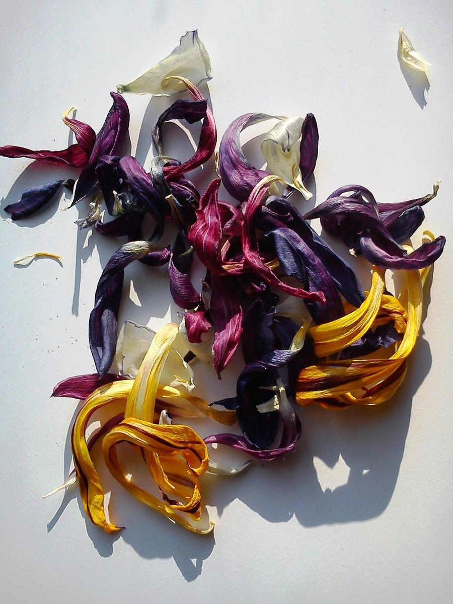 tulpen - vanitas by christophf