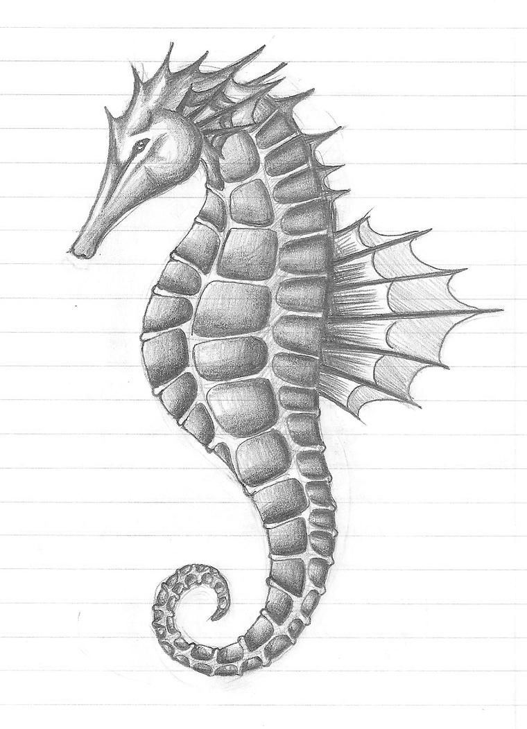 Seahorse by t2t on DeviantArt