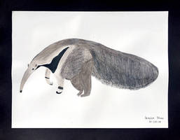 Jessica Shaw Anteater by DH-Students-Gallery