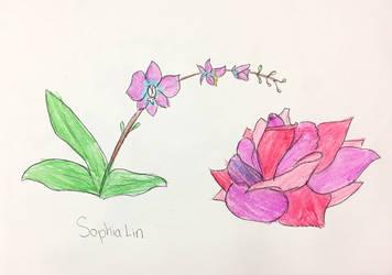 Sophia Lin 2019