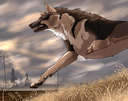 Oat meadow