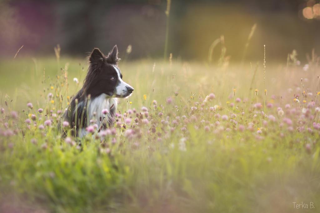 Lotka in the pink flowers by TerkaLoty