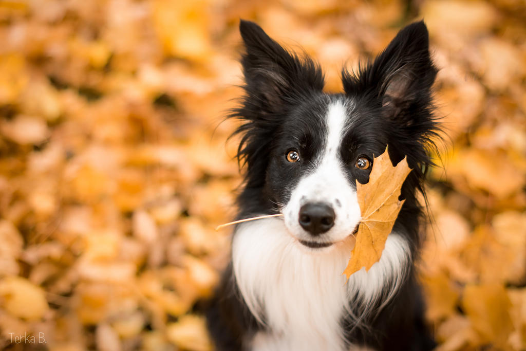 Autumn by TerkaLoty