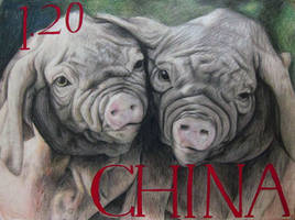 Wrinkly piggies by Reincheck
