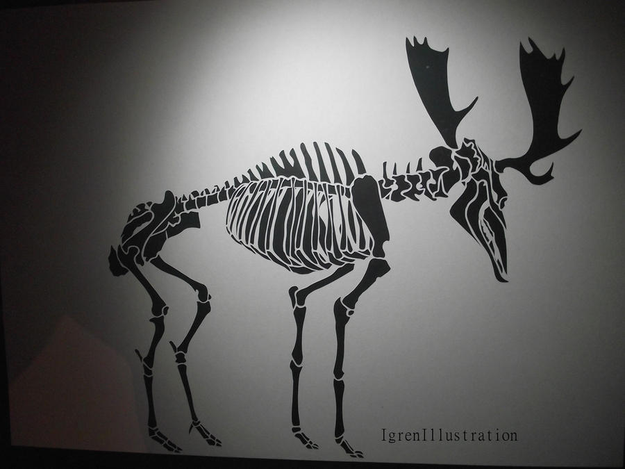 Moose Skeleton papercut by IgrenIllustration