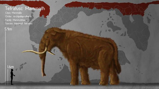 Tetratusc Mammoth