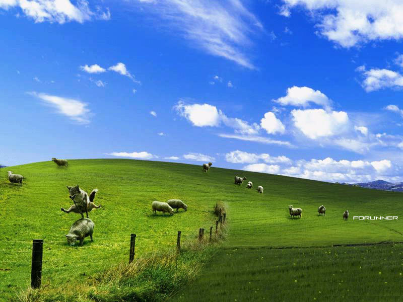 descargar windows xp wolf