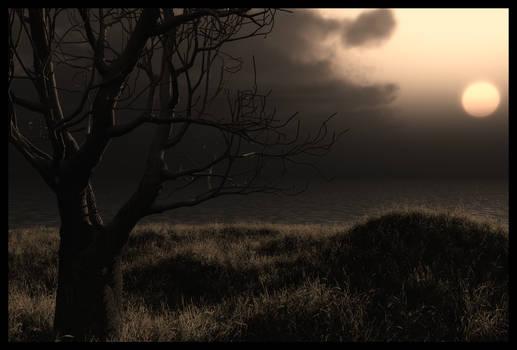 tree sunset stock
