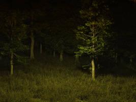 dark forest stock by anodyne-stock