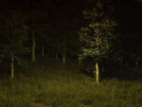 dark forest stock