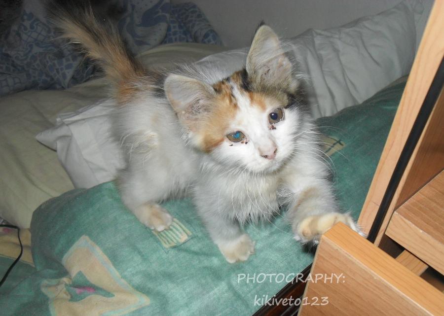 My Kitten~ (stock?) by RippedMoon