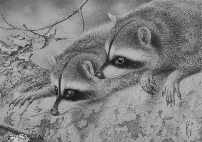 RACOON by toniart57