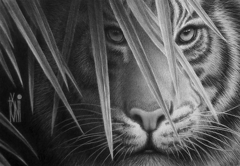 Toniart57... Indonesian_tiger_by_toniart57-d6i1kaq