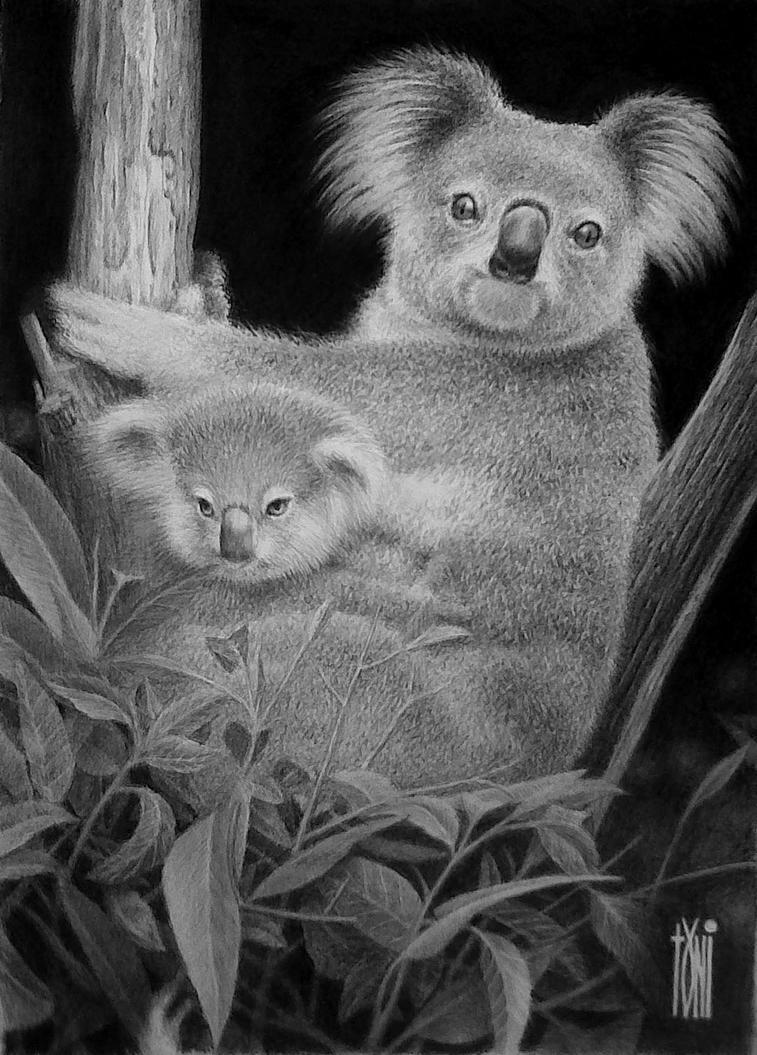 Koala by toniart57