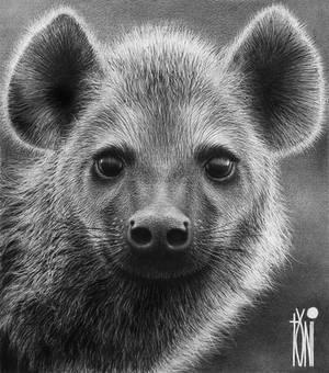 the adorable Hyena