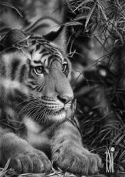 Stalking by toniart57