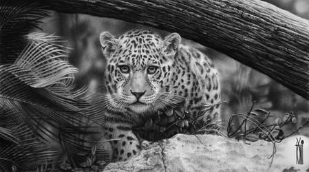 Jaguar by toniart57
