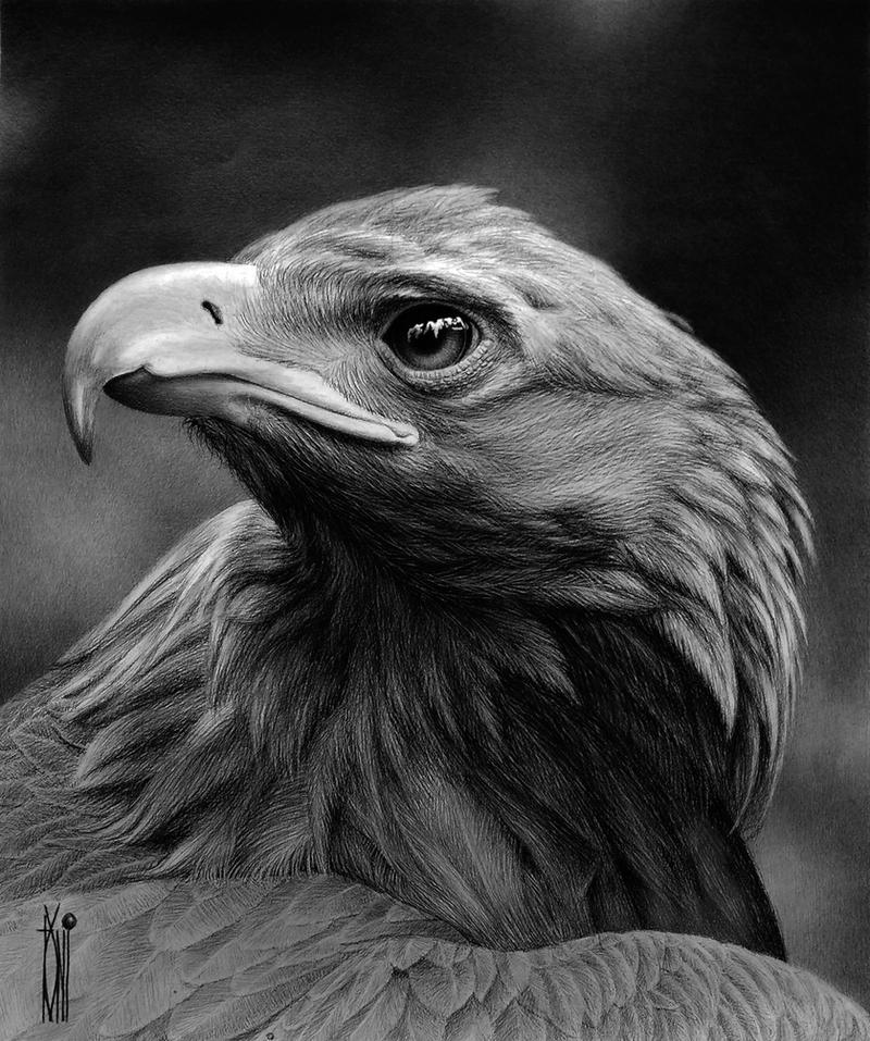 eagle dark by toniart57