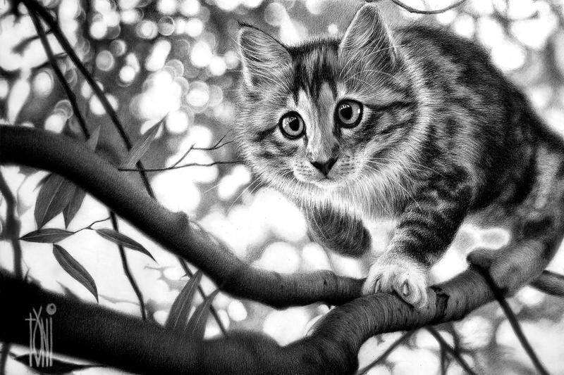 Cattrees by toniart57