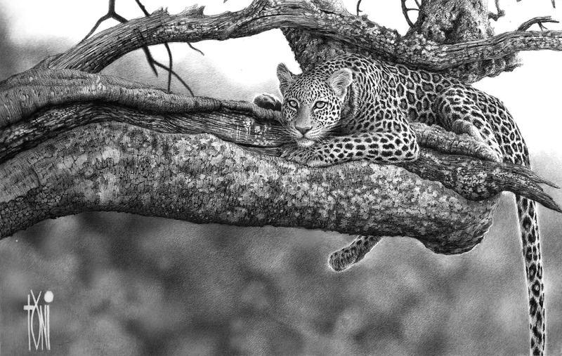 leopard by toniart57