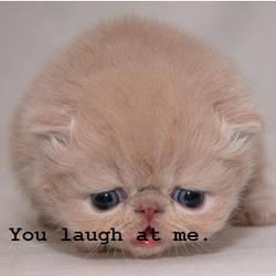 don't lol cat by pokemonsdoom