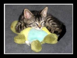 Kitten by shadowwolfdemon