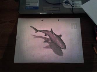 Shark by xXSunLightXx