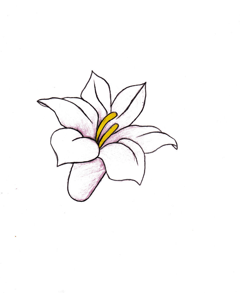flower drawing by alexandraxaccidental on deviantart