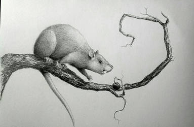 Rat in a tree