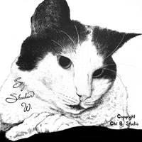Mona Kitty