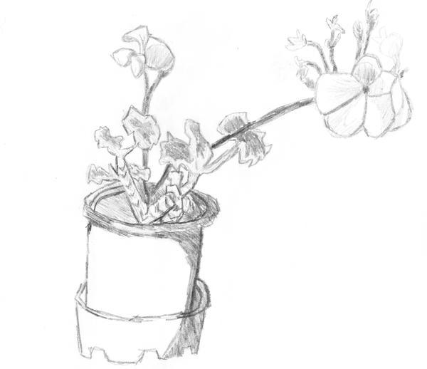 flowers devine wallpaper - photo #15