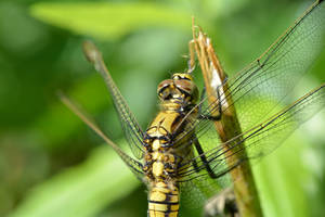 Dragonfly Macro by BeatrixW
