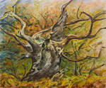 The old tree by cebaum