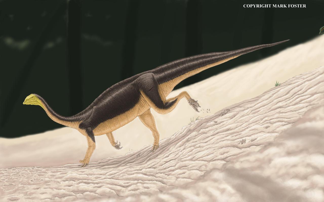 Plateosaurus engelhardti by Iphicrates