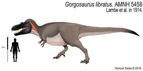 Gorgosaurus libratus (adult version).
