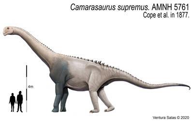 Camarasaurus supremus.