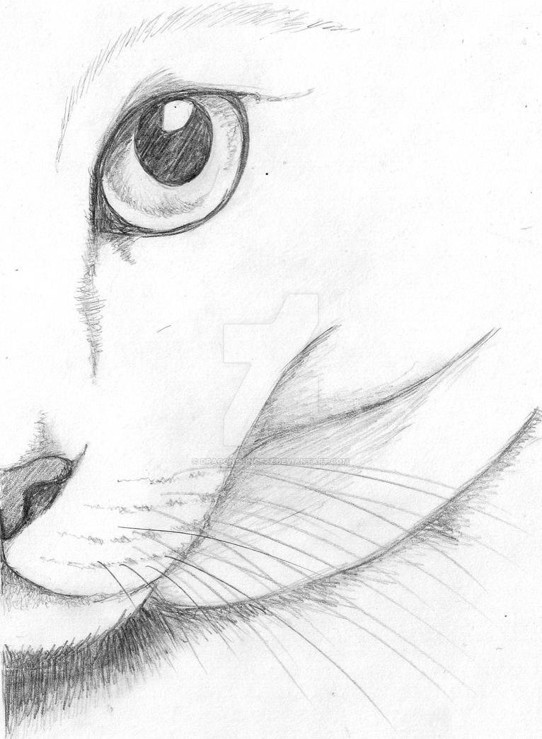 Cat Eye Sketch by DragonPrincezz on DeviantArt