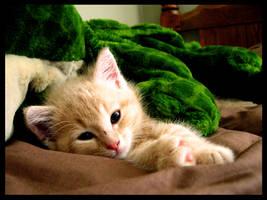 Tori's Kitten by KravinMorhead