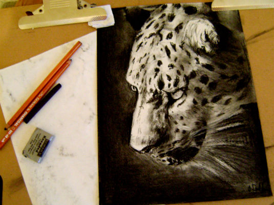 Amur Leopard - Charcoal by Sunnyfeather