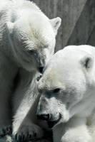 Cuddling Bears by DeviantTeddine