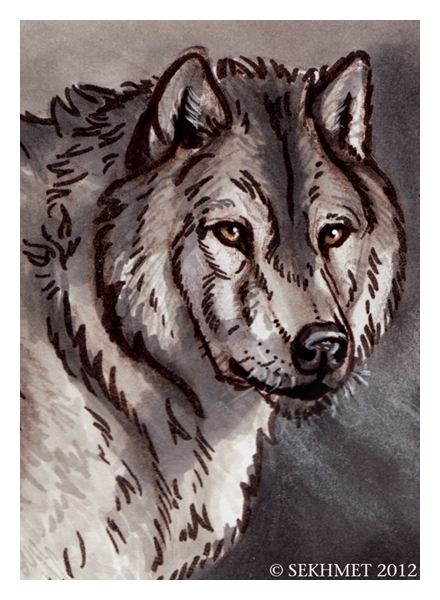 Wolf Study by Art-of-Sekhmet