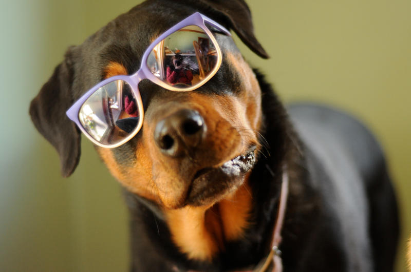 Image Result For Dog With Sungl Es