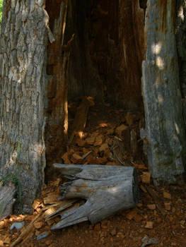 Pajstun - 2 - Tree Trunk by Gwathiell