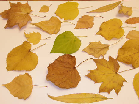 Autumn 02 by Gwathiell