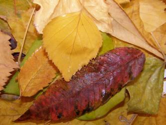 Autumn 07 by Gwathiell