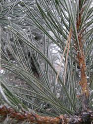 Winter 01 by Gwathiell