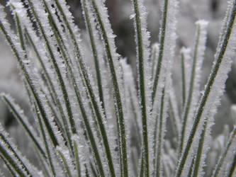 Winter 03 by Gwathiell