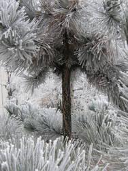 Winter 04 by Gwathiell